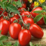 Tomatoes Pusa Ruby Red seeds